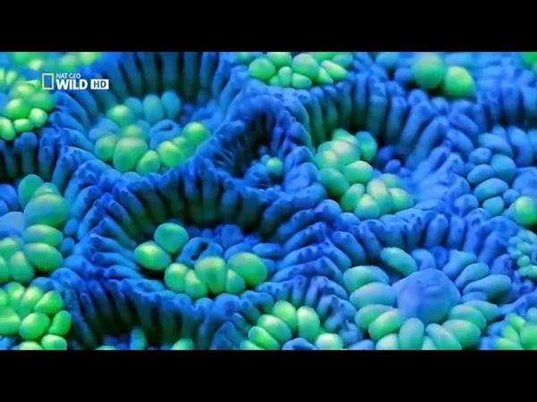 Жизнь на Большом Барьерном рифе.Большой Барьерный риф (Часть 1) Док фильм