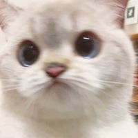 Личная фотография Musical Cat
