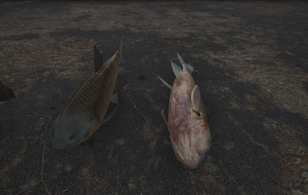 Свежие рыбины... Хотя давно уже - нет.