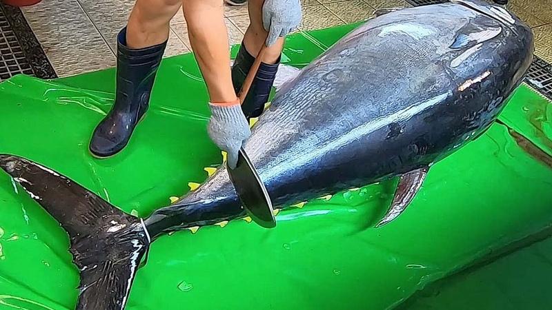 Knife Cuts 600lb Giant Bluefin Tuna like Butter