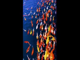 heart_eyes__tropical_fish_Super Gorgeous Fish Garden!_tropical_fish__heart_eyes_ ( 270p ).mp4