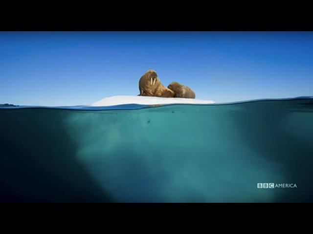 Planet Earth Blue Planet II Radiohead Hans Zimmer ocean bloom BBC America