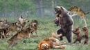 Bàn tay chúa trời của gấu giáng xuống những kẻ thù nguy hiểm bậc nhất sẽ ra sao - Kẻ thù ấm ức