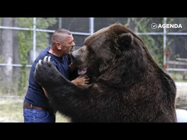 Джим и Джимбо крепкая дружба человека и медведя