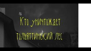 Кто уничтожает тольяттинский лес